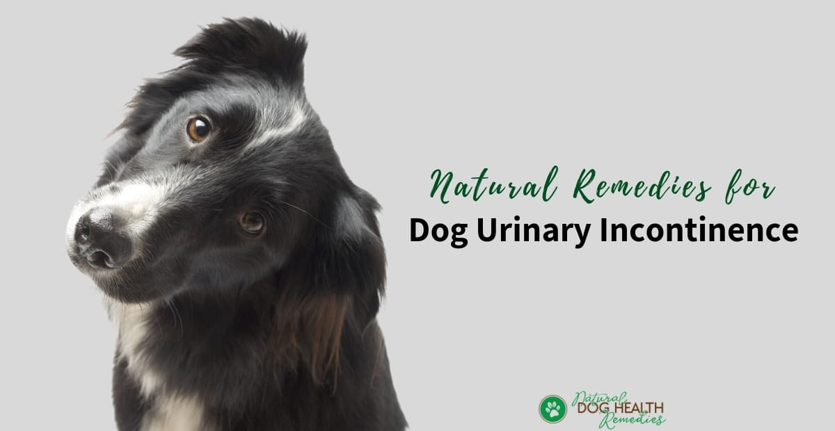 Natural Dog Incontinence Remedies