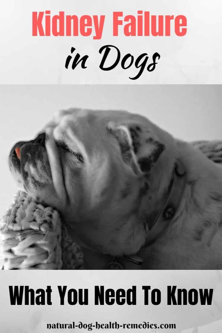Dog Kidney Failure