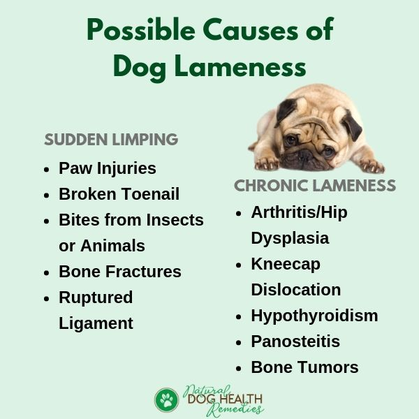 Causes of Dog Lameness