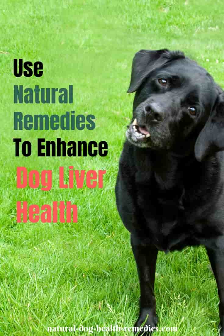 Dog Liver Health - Natural Remedies