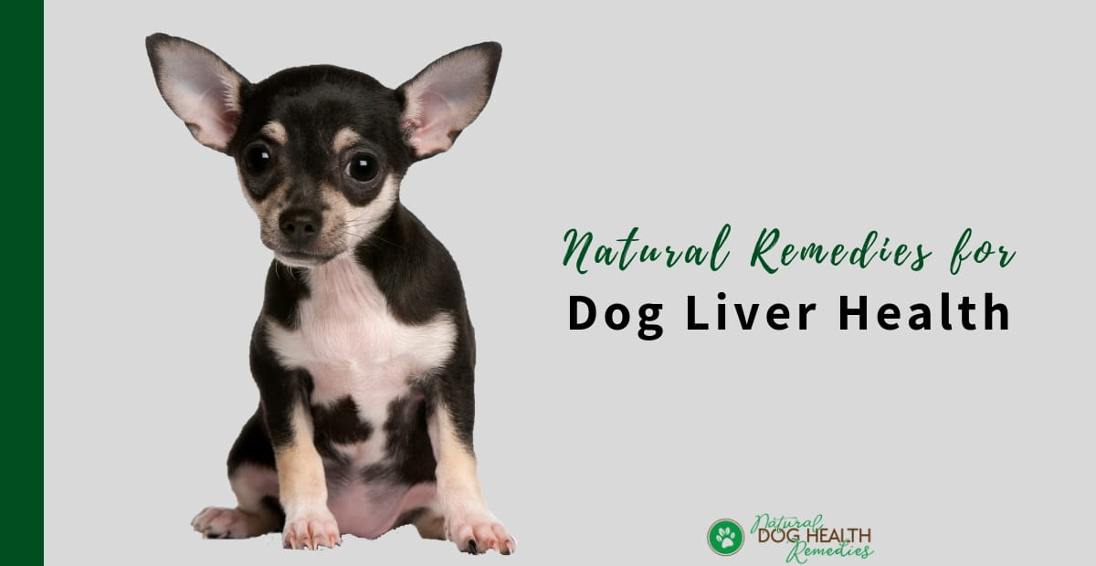 Natural Remedies for Dog Liver Health