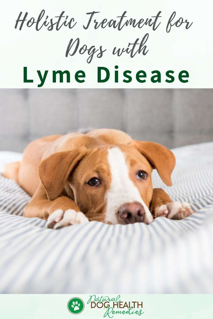 Dog Lyme Disease Treatment