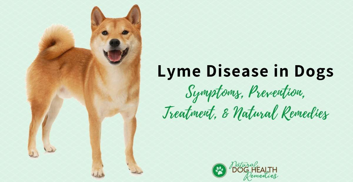 Dog Lyme Disease