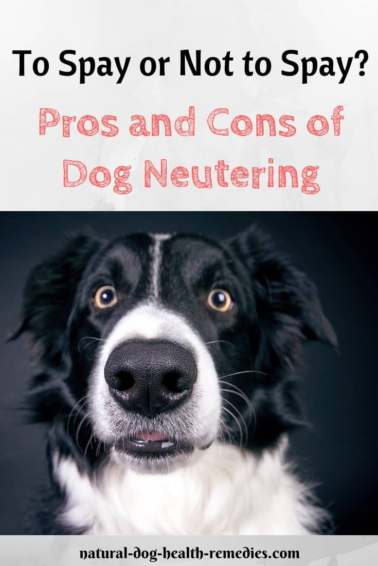 Dog Neutering Pros & Cons