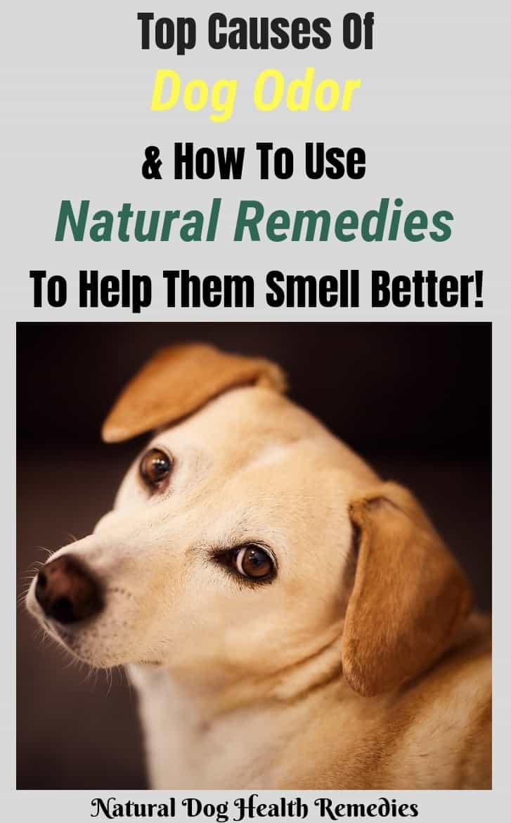 Dog Odor Causes