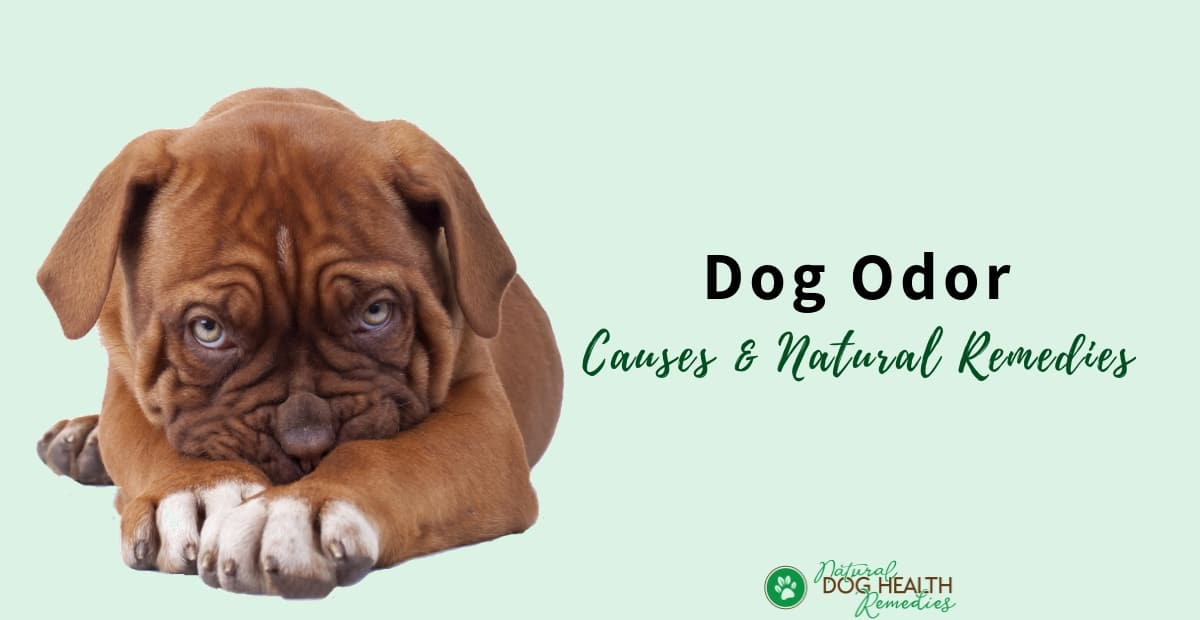 Dog Odor Causes
