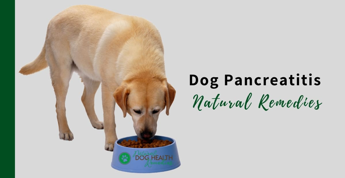 Dog Pancreatitis Remedies