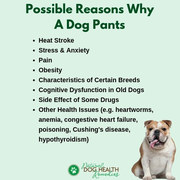 Causes of Panting in Dogs