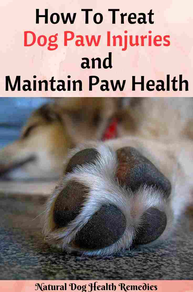 Dog Paw Health Remedies
