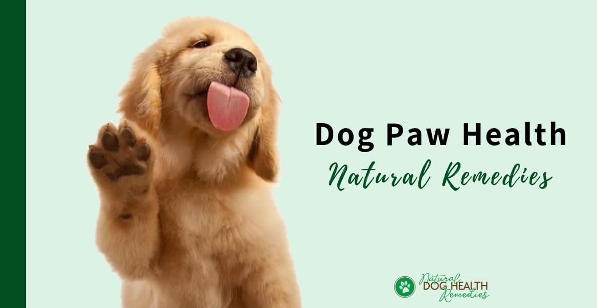 Dog Paw Health