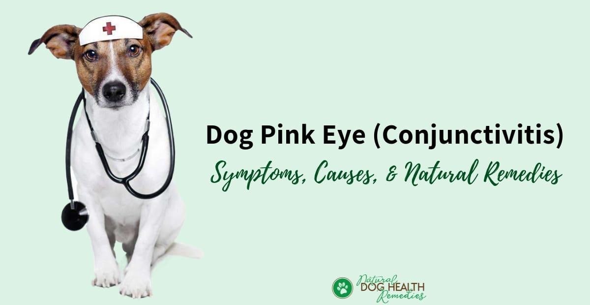 Dog Pink Eye