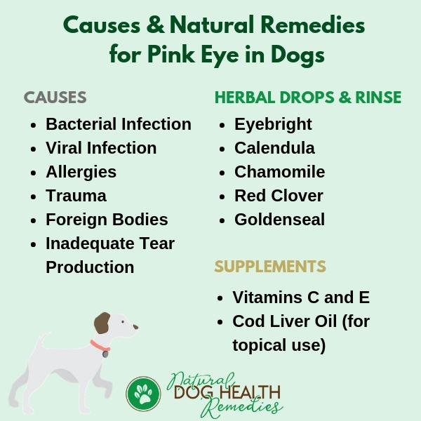 Dog Pink Eye (Dog Conjunctivitis) Natural Remedies