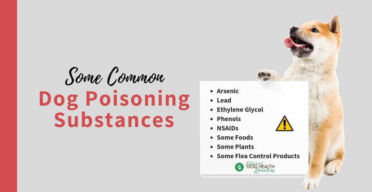 Dog Poisoning Substances