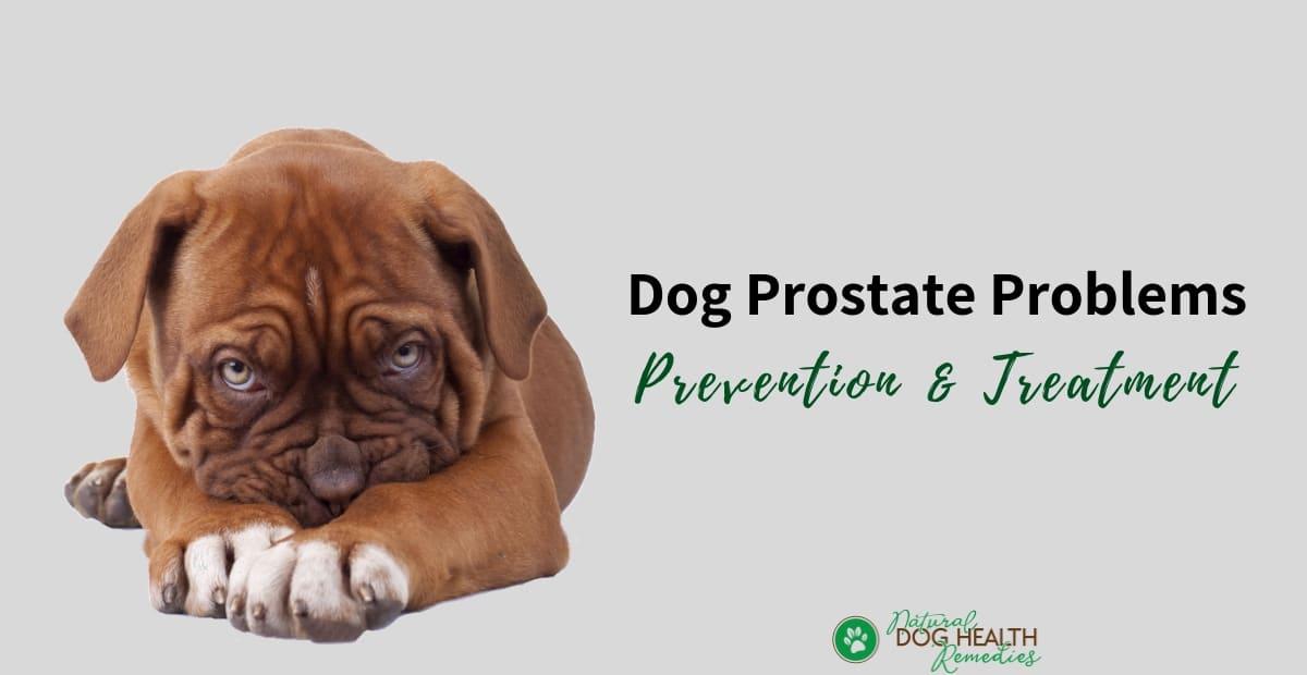 Dog Prostate Problems
