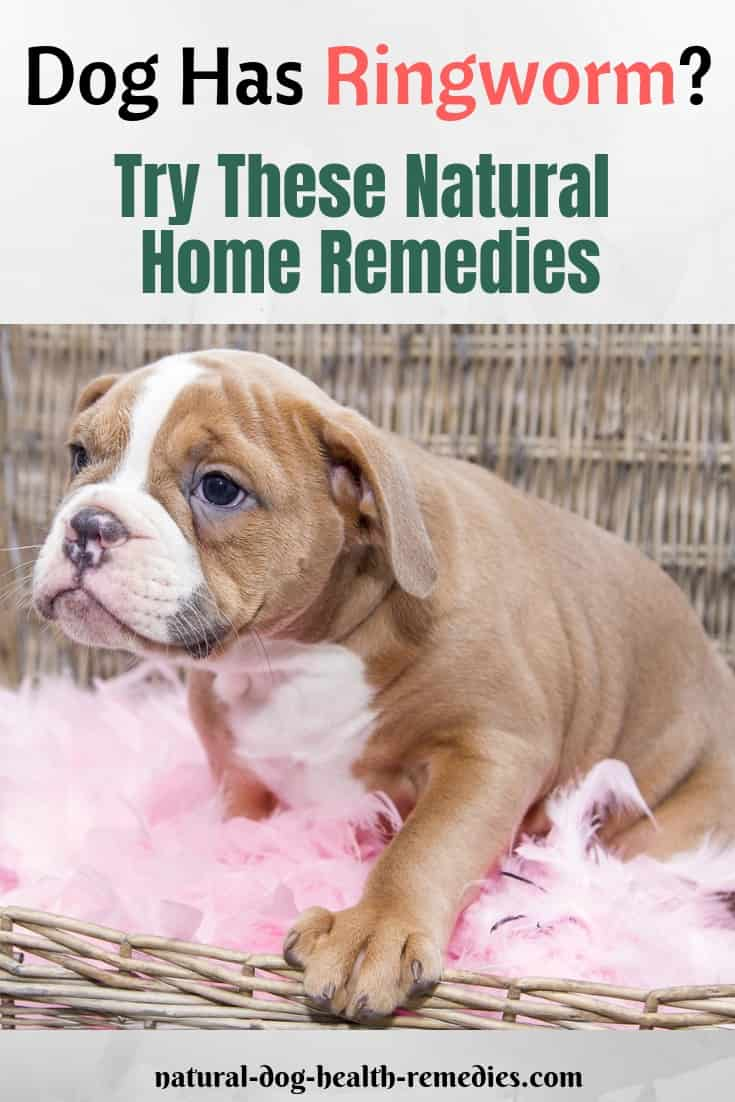 Natural Dog Ringworm Remedies | Home Treatment for Ringworm on Dogs