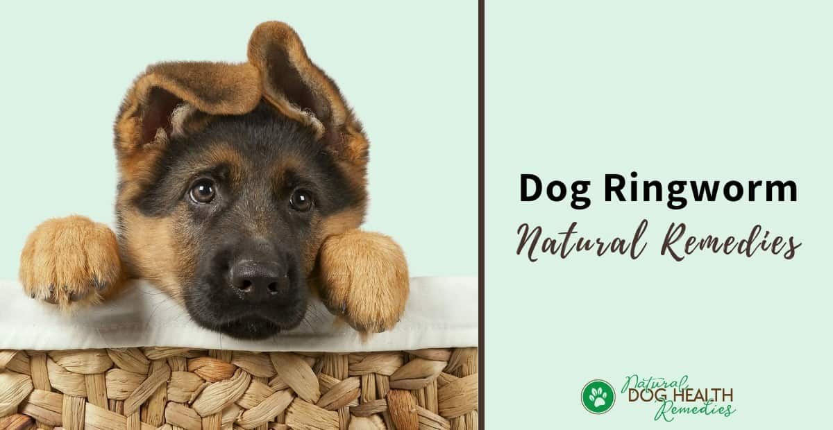 Dog Ringworm Remedies