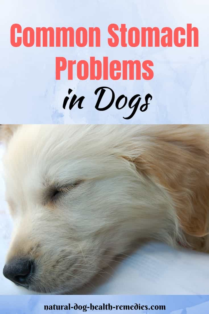 Dog Stomach Problems