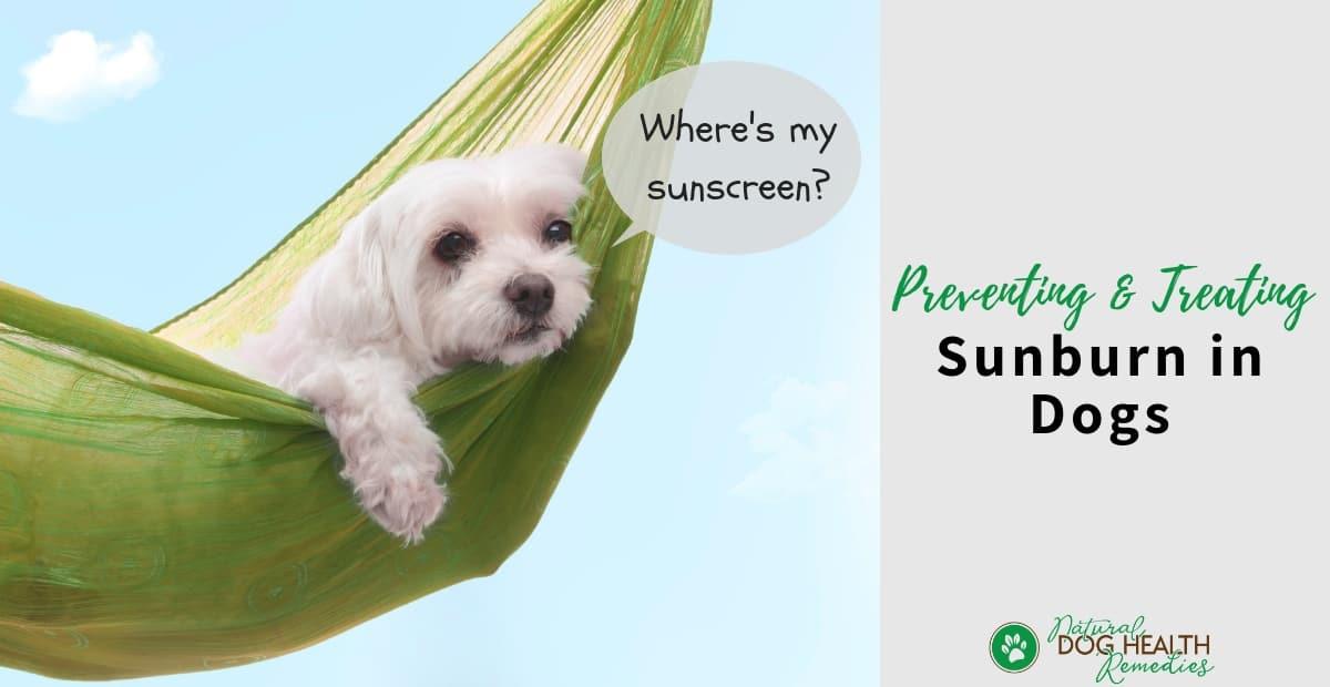 Dog Sunburn
