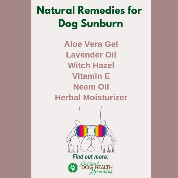 Dog Sunburn Natural Treatment