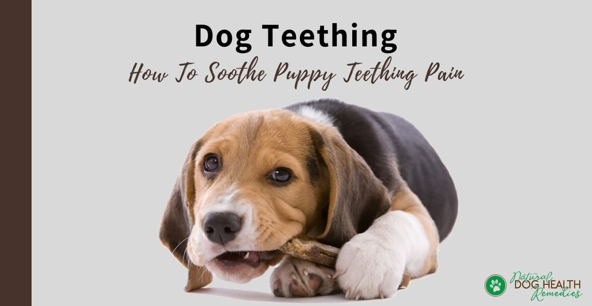Soothe Puppy Teething Pain
