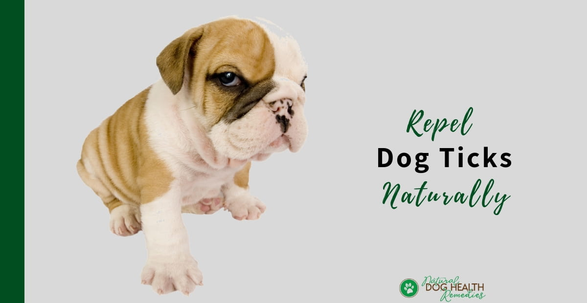 Repel Dog Ticks Naturally