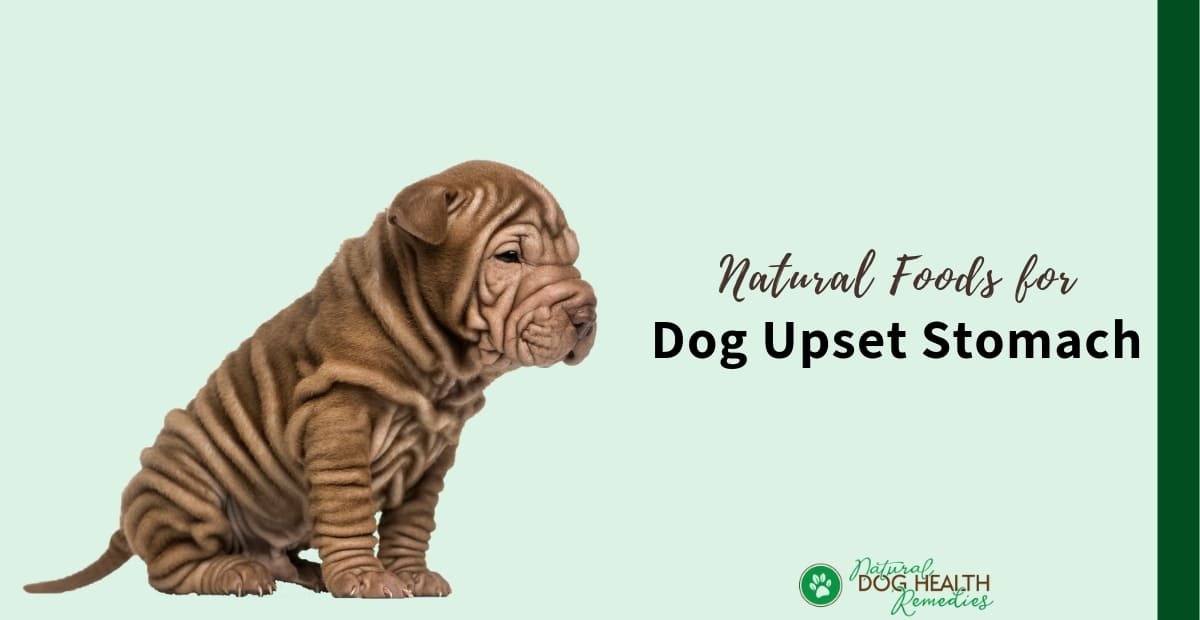 Foods for Dog Upset Stomach