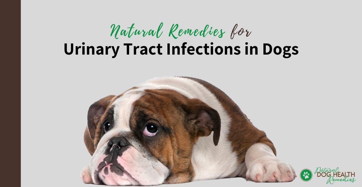 Dog Urinary Tract Infections - Symptoms, Treatment & Natural Home