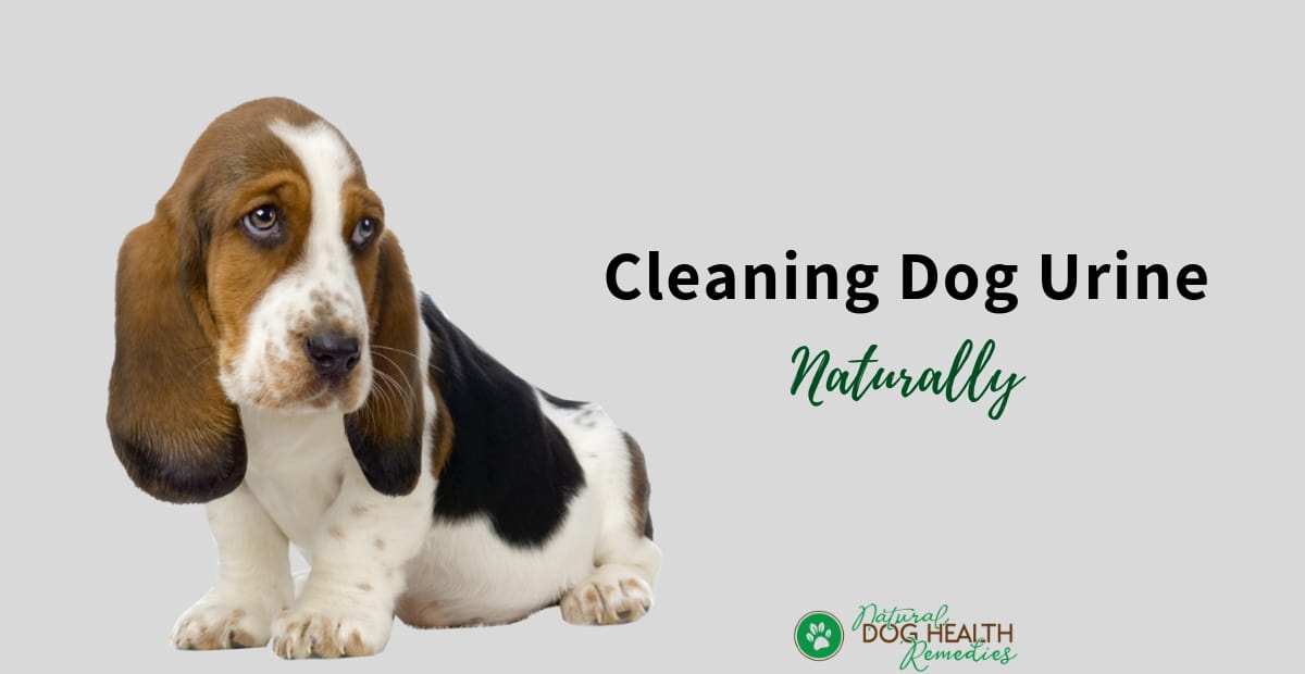 Dog Urine Cleaning