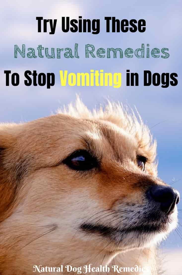 Natural Dog Vomiting Remedies