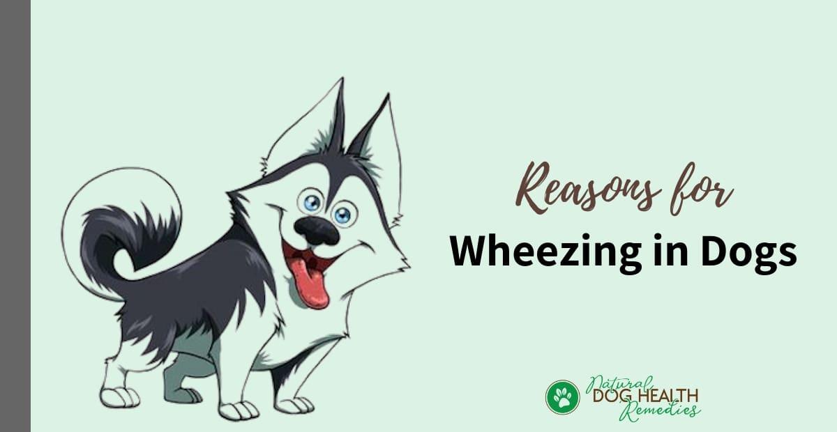 Dog Wheezing