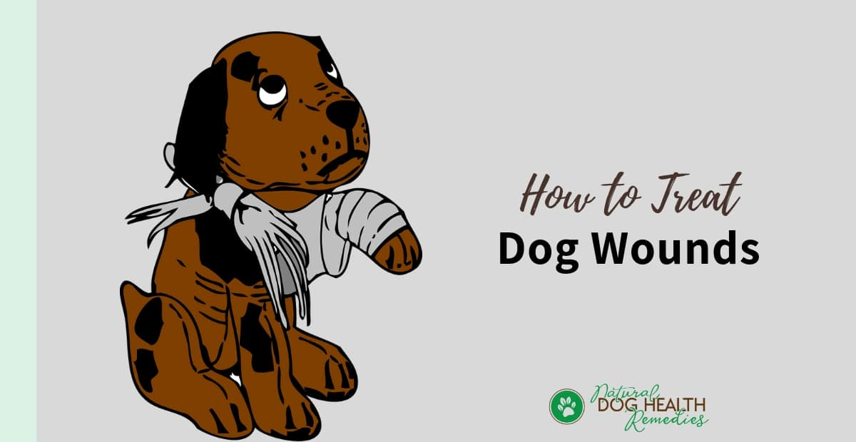 How to Treat Dog Wounds
