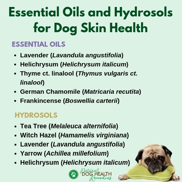 Safe Essential Oils for Dog Skin