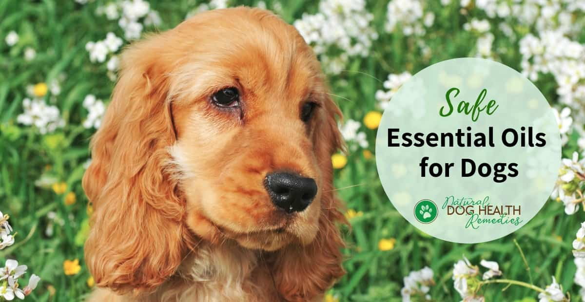 Safe Essential Oils for Dogs
