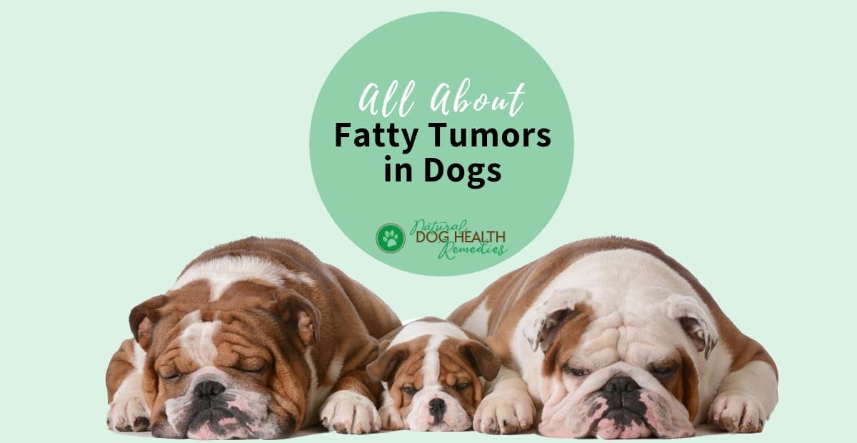 Fatty Tumors in Dogs - Causes and Natural Treatment