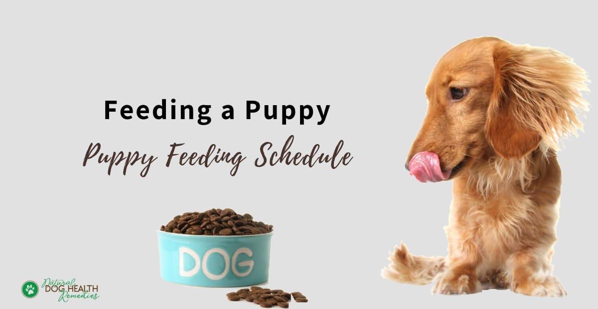 Feeding a Puppy