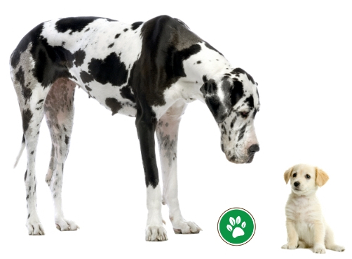 Breed Size and Feeding a Puppy
