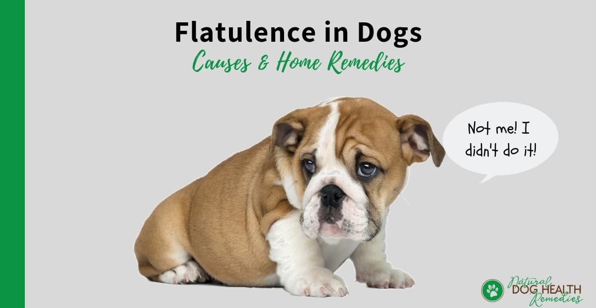 Flatulence in Dogs
