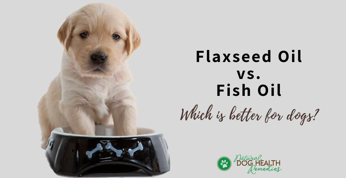Flaxeed Oil for Dogs