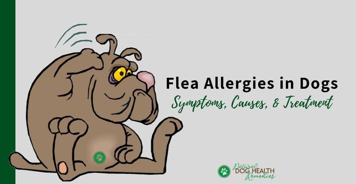 Flea Allergies in Dogs