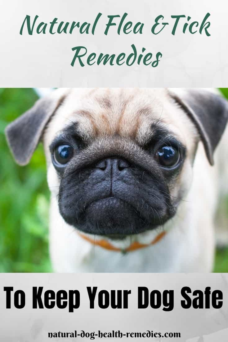 Natural Flea Tick Remedies