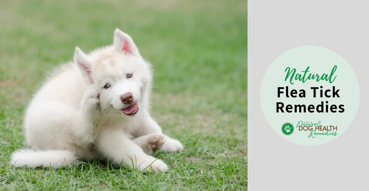 Flea Tick Remedies for Dogs