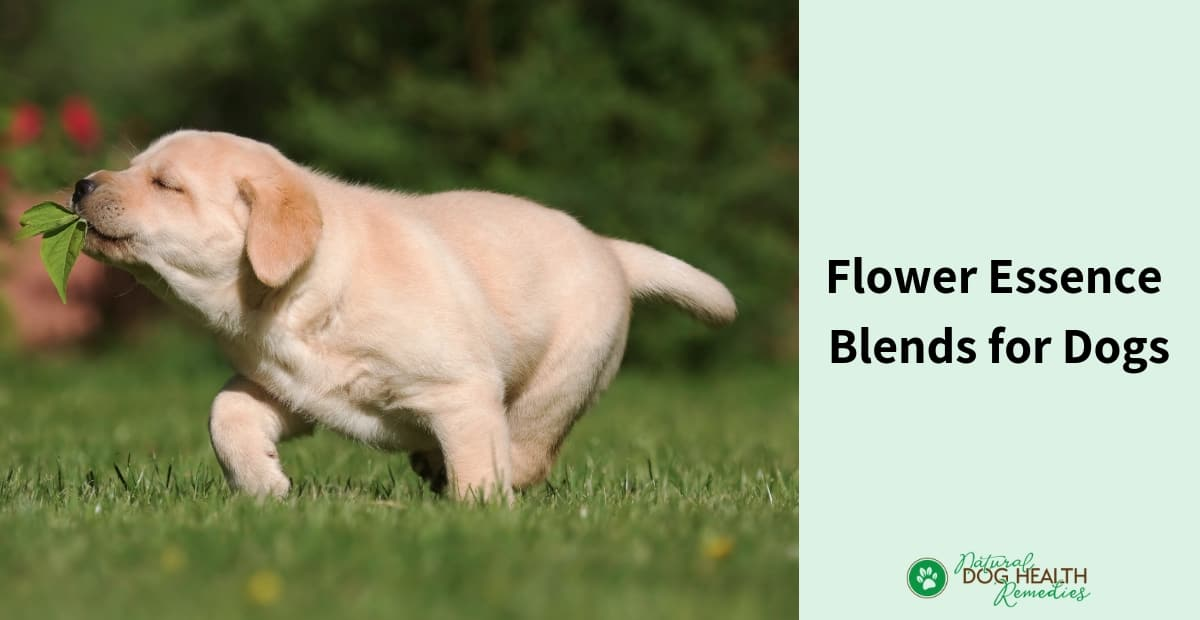 Flower Essence Blends for Dogs