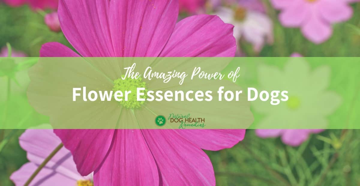 Flower Essences for Dogs
