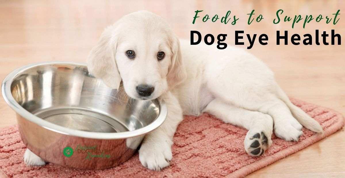 Foods for Dog Eye Health