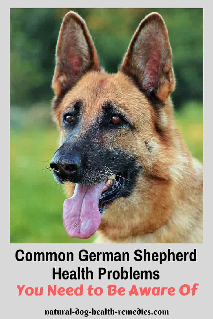 Common German Shepherd Health Issues