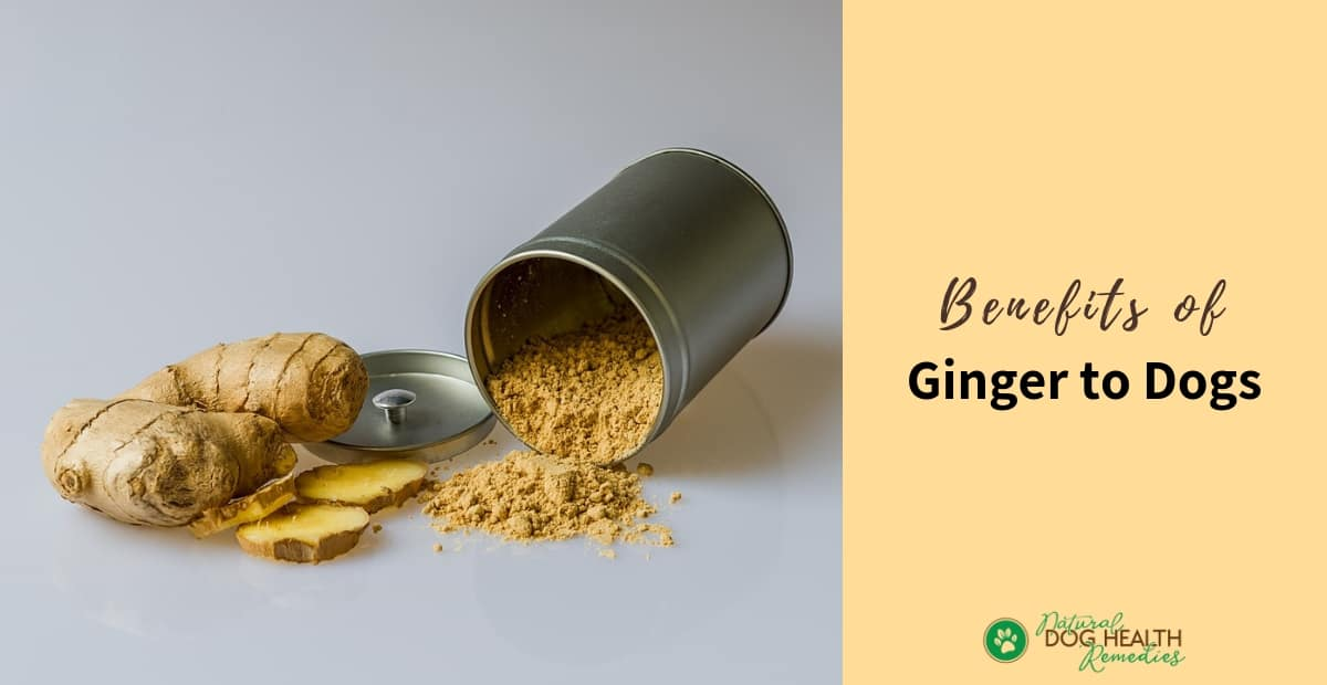 Ginger Benefits for Dogs