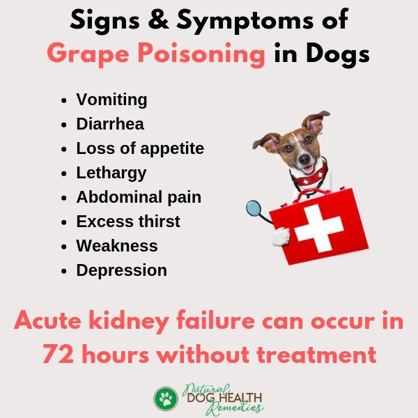 Signs of Grape Poisoning in Dogs