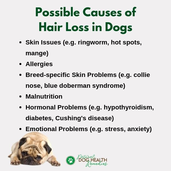 Dog Hair Loss Causes