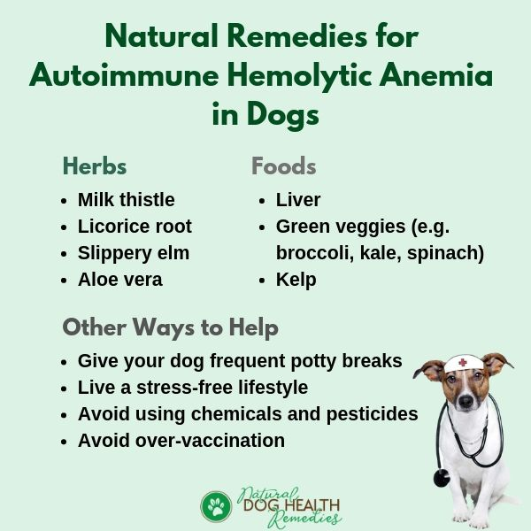 Natural Remedies for AIHA in Dogs