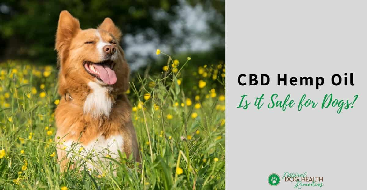 Hemp Benefits for Dogs